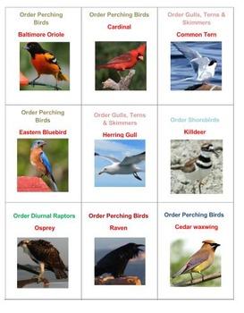 Birds Pictominoes  Volume 1