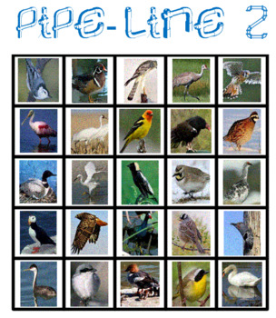 Birds Pipe Line Game -- Volume 3