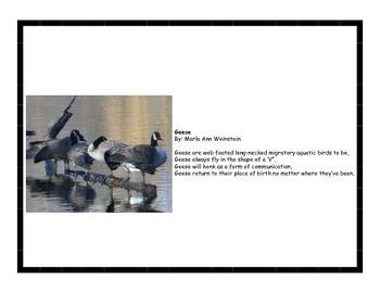 Birds Poetry Pack #2