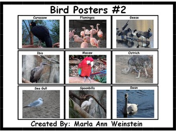 Bird Posters #2