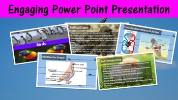 Birds Lesson with Power Point, Worksheet, and Color Activity