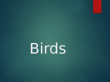 Birds Powerpoint