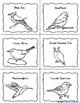 Birds Research Activities