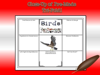 Birds Research Tri-Fold Activity