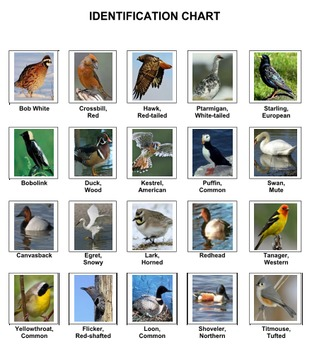 Birds Sort Game Volume 3