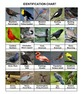 Birds Sorting Game  Volume 1
