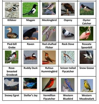 Birds Sorting Game Volume 2