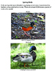 Birds - Spring Workbook