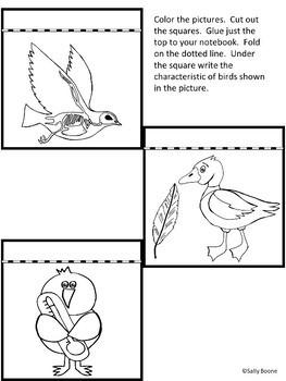 Birds - Tab Book, Flip Cards  Interactive Notebook