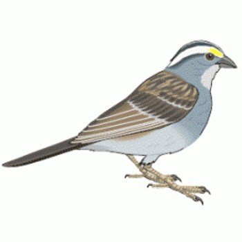 Birds- Text and Exercise Sheets