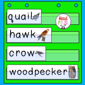 Birds Theme Pocket Chart Word Cards
