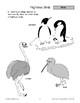 Birds: Three Types
