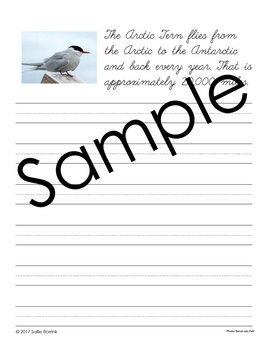 Birds Unit - Copywork - Cursive - Handwriting