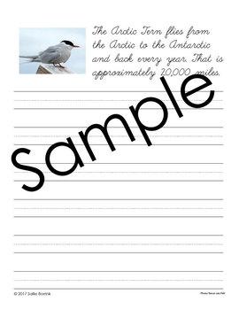 Birds Unit - Copywork - Print and Cursive - Handwriting