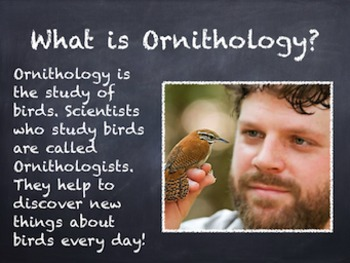 Birds Vol. 01: Introduction to Birds - PowerPoint Slideshow Presentation