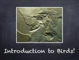 Birds Vol. 01: Introduction to Birds - PowerPoint Slidesho