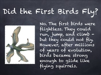 Birds Vol. 02: Prehistoric Birds - PowerPoint Slideshow Presentation