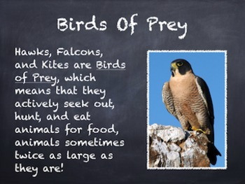 Birds Vol. 07: Hawks Falcons & Kites - PowerPoint Slideshow Presentation