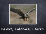 Birds Vol. 07: Hawks Falcons & Kites - PowerPoint Slidesho