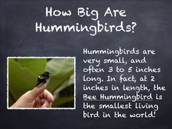 Birds Vol. 08: Hummingbirds - PowerPoint Slideshow Presentation