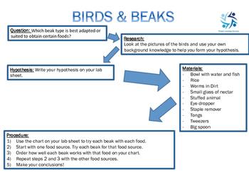 Birds and Beaks Investigation