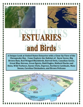 Water: Birds and Estuaries: Rivers Meet the Ocean (Incorporate with Water Cycle)