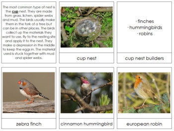 Birds and Nests: Information & Photo Cards