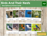 Birds and Their Nests: Information & Photo Cards