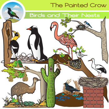 Birds and their Nests Clip Art Set