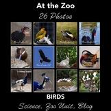 Birds at the Zoo - Photos