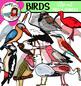 Birds clip art Mega bundle- Big set of 82 items!