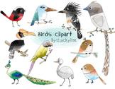 Birds clip art set , instant download, PNG file - 300 dpi