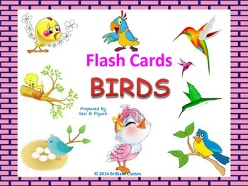 Birds flash cards