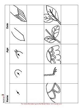 Monart Drawing Project: Birds in Flight