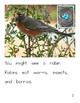 Birds in Your Backyard Reading Book