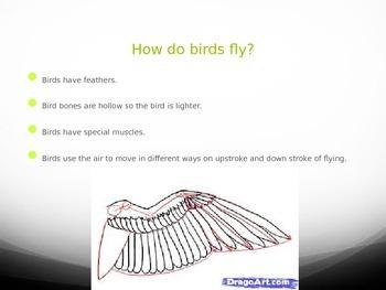 Birds in flight powerpoint