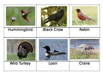 Birds of New England Cards