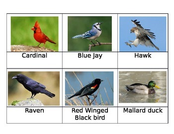 Birds of New England Cards