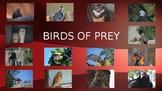 Birds of Prey-Pictures, diet, habitat, attributes, and babies.