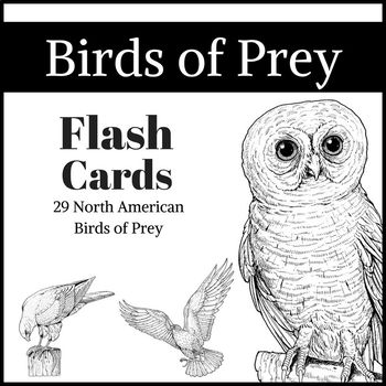 North American Birds of Prey Flashcards