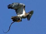 Birds of Prey  Power  Point  Presentation