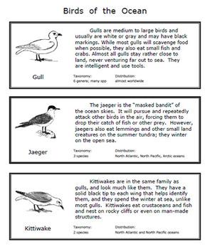 Birds of the Ocean Mini Unit