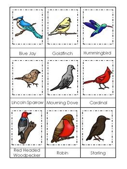 image regarding Printable Birds referred to as Birds themed 3 Component Matching Activity. Printable Preschool Activity