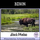Bison Stock Photo Personal and Commercial Use