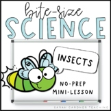 Insects | Science Mini-Lesson | PowerPoint & Google Slides