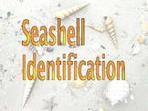 Bivalves and Univalves - Mollusks - Identification Pictures