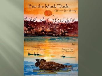 Bizi the Musk Duck of Barren Box Swamp