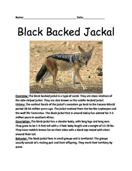 Black Backed Jackal - review article questions facts information vocabulary