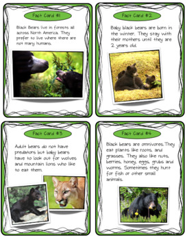 Black Bear Fact Find