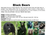 Black Bears Slideshow